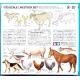 "A set of ""animal figures'"